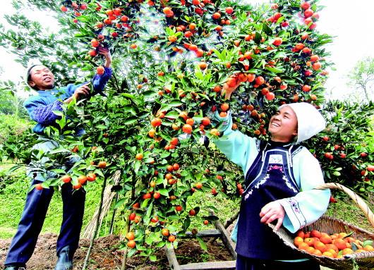 专业技术协会架起致富桥   农村专业技术协会是农民自己的技术合作组织,是科普惠农的重要基层组织。全省2300余个农技协一头连着农户,一头连着科技工作者,将分散的农民组织起来,学习、运用农业科技,解决科技推广难问题;同时,协会又助推了规模化生产和经营,帮助小农户应对大市场。   湄潭县茅坝米种养业协会采取公司+专业合作社+基地+协会+农户模式,引领种粮农户加入协会共谋发展,不断促进当地农民群众增产增收。协会现有会员416名,种粮大户25户,会员种粮总面积1000余亩。   该协会以科技