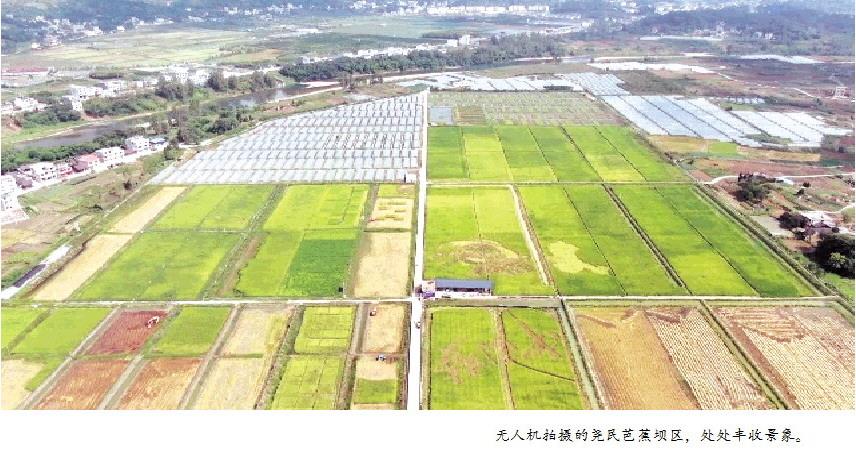 """以""""绿色稻+""""生态种养模式,实现产业提质增效、农民增收脱贫,思南县塘头镇尧民芭蕉坝区——稻花香里说丰收 蛙声一片产业兴"""