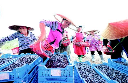 贵州丹寨上万名农村