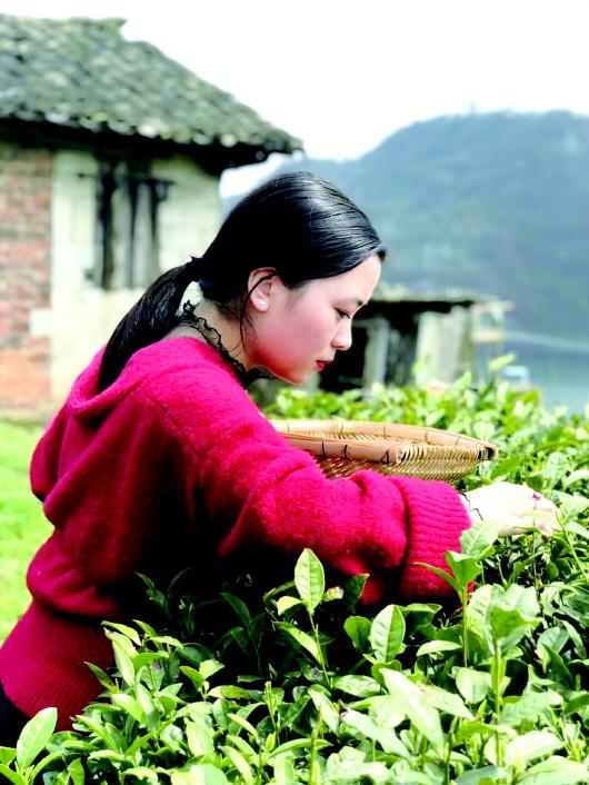 贵州茶叶集天地之灵
